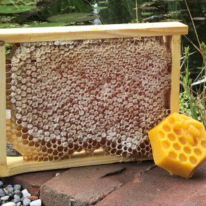 Honig direkt aus der Wabe